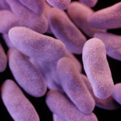 CRE: The superbug that spreads across the country
