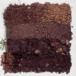 Soil types: The importance of what lies beneath ground level