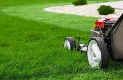 Best Practice Summer Lawn Care Tips from TruGreen Lawn Care