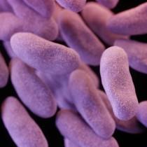 150218221137-carbapenem-resistant-enterobacteriaceae-exlarge-169