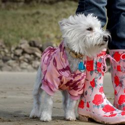 How to Find Affordable Dog Clothes